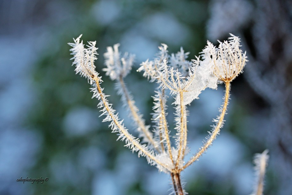 frost-3